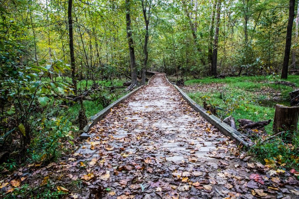 path covered with leaves